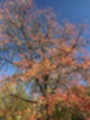 fotos i-phone 27.10.17 881.JPG