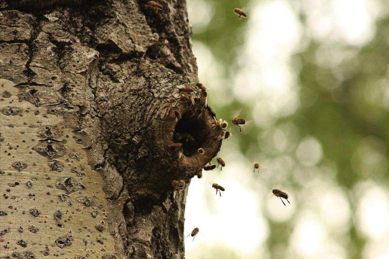 Tree Cavity