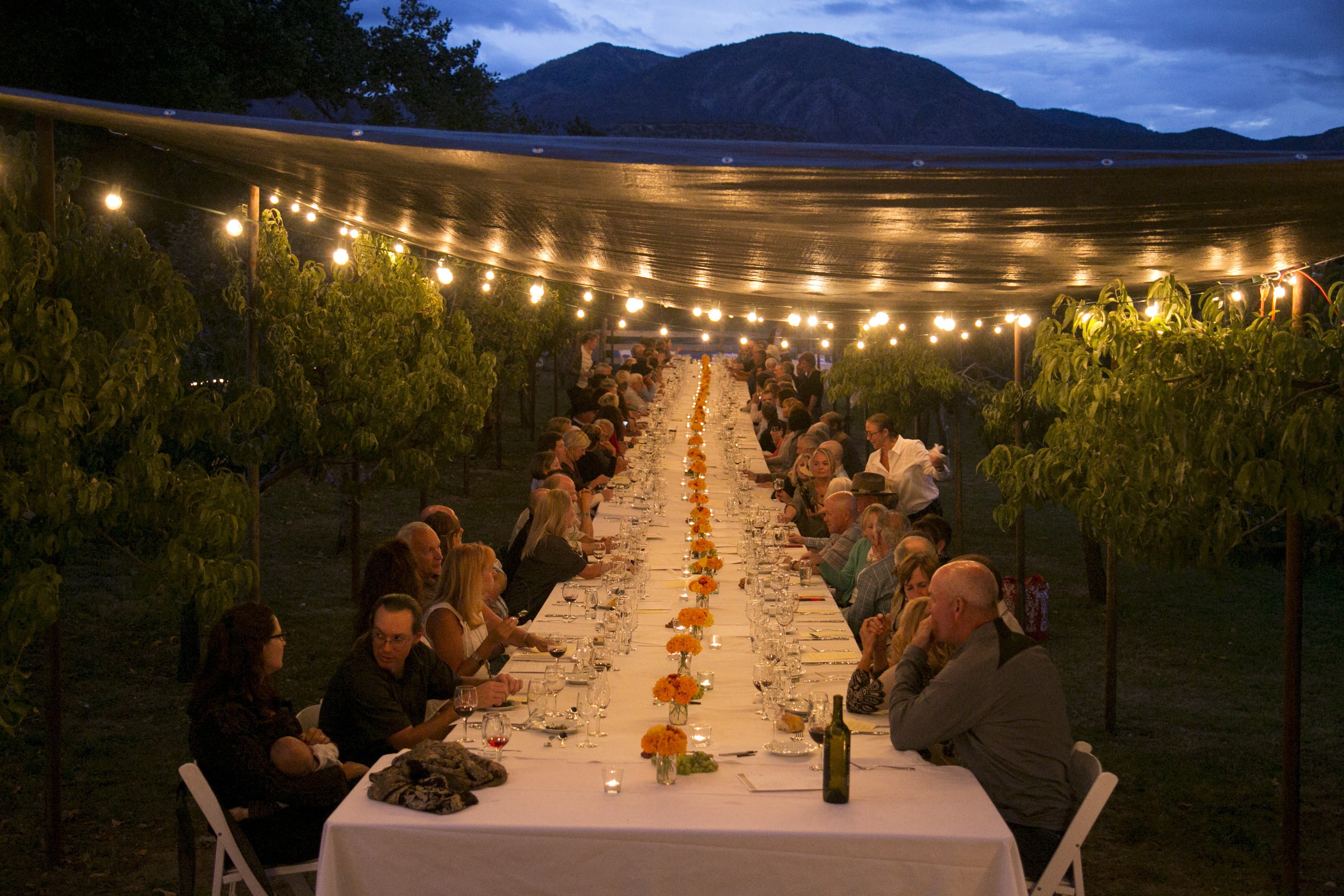 Sutcliffe Vineyard harvest dinner