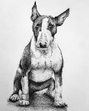 English Bull Terrier Print