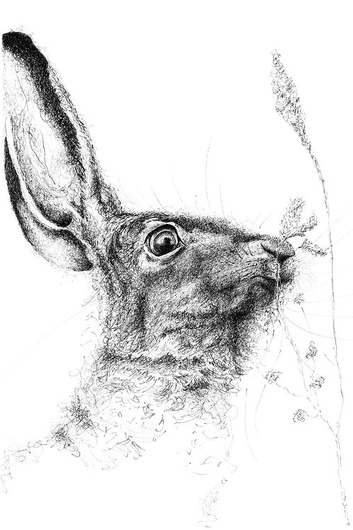 Hare with Corn