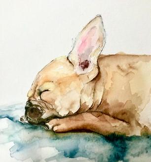 Yogi Puppy