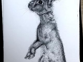 Mischief Whiskers!