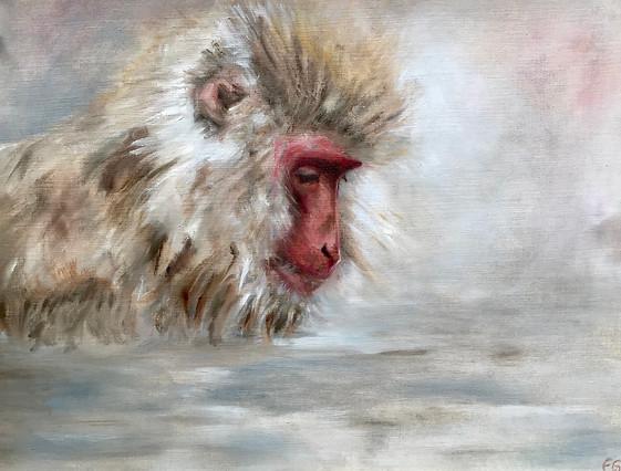 'Zen Macaque'