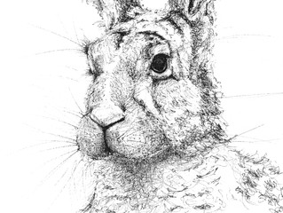 Hare pen & ink drawing