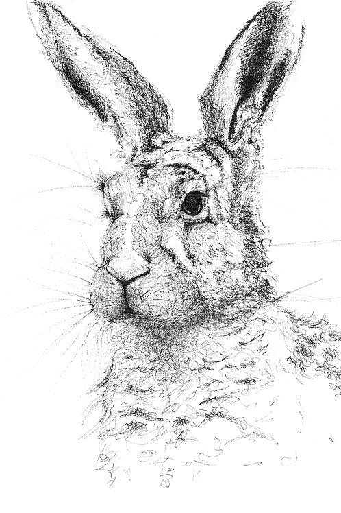 Soulful Hare