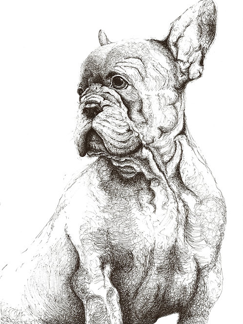 Proud French Bulldog