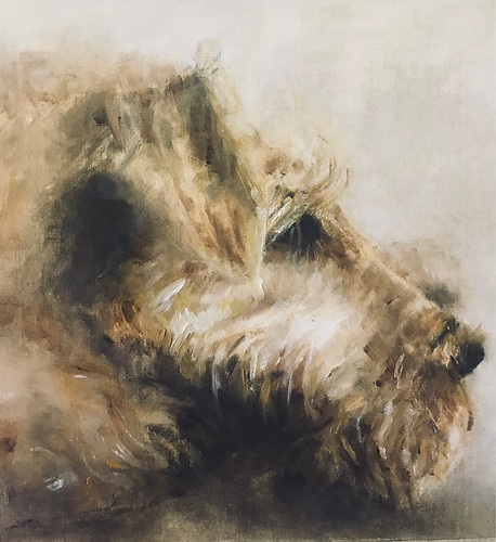 'Pip' Irish Terrier