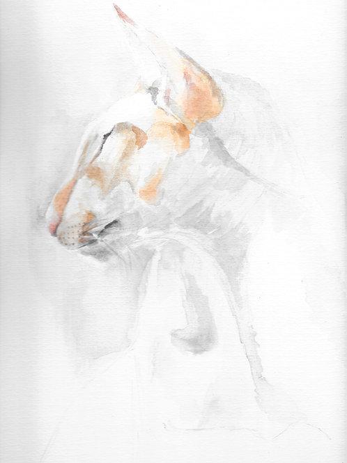 White & Ginger Cat