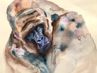 Watercolour Silverback.
