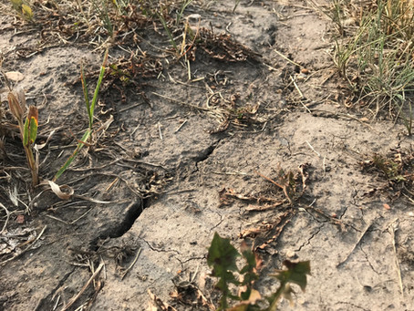Take action on dry conditions