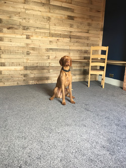 Jasp, rump-testing the new carpet