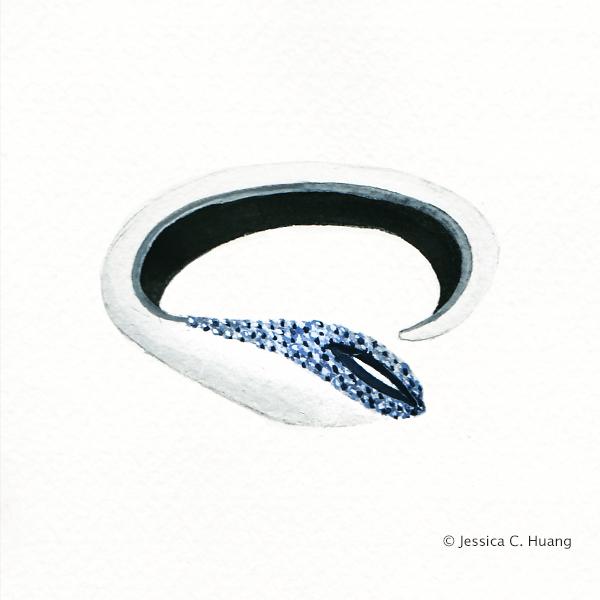 Blue Spinel Leather Bangle
