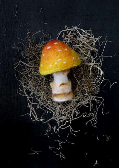 Yellow Muscaria Mushroom