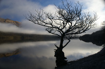 Espedair Creative Mystic Tree