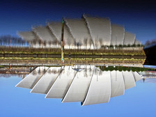 Upside Down Armadillo Glasgow.JPG