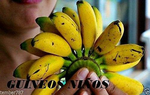 1 Banana bulb of guineo NiÑo