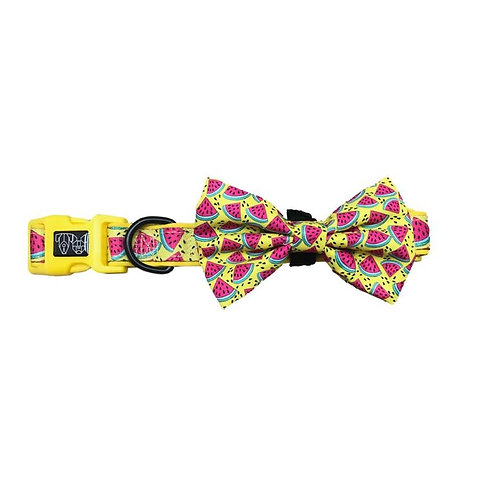 Big & Little Dogs Collar & Bow Tie-Melon