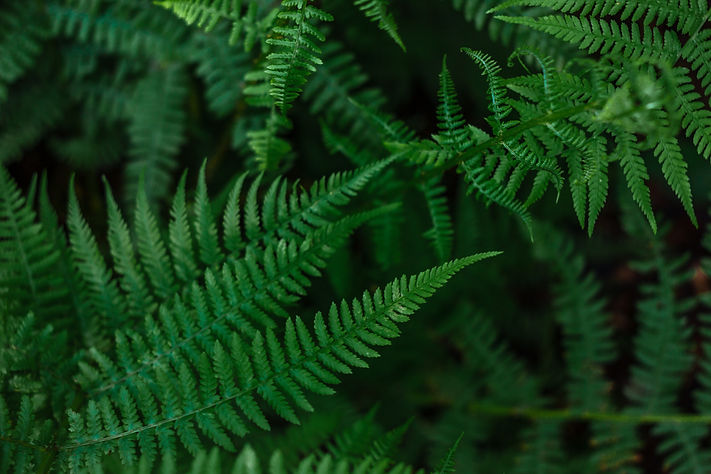 Ferns in the forest. Beautiful backgroun