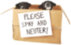 please_spay_and_neuter_puppies_in_box.jp