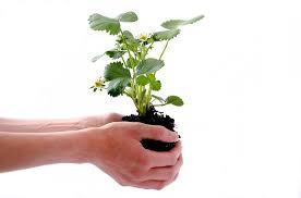 Plant Minerals