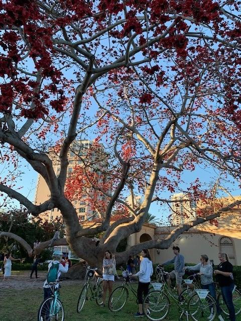 Biking tour stopped in front of MFA and Kapok tree