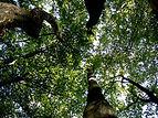 Tree Removal Warrnambool
