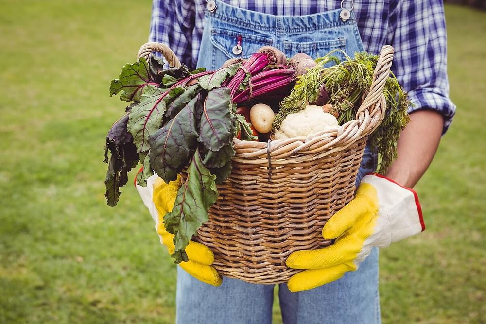 basket-freshly-harvested-vegetables-healthy-eyes
