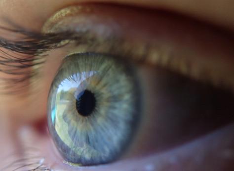 Eyelids Explained!