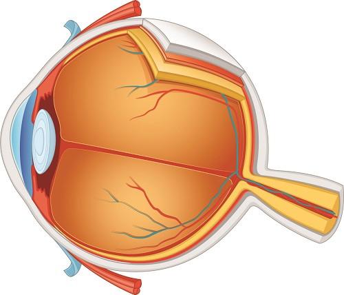 white pupils diagram