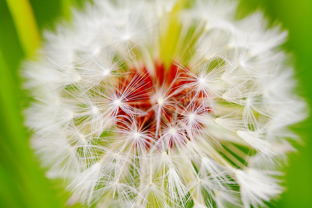 pollen eye allergies