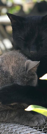 Sammy the grey cat didn't have a mask to