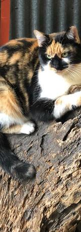 Blanche #catsofinstagram #haroldsplants