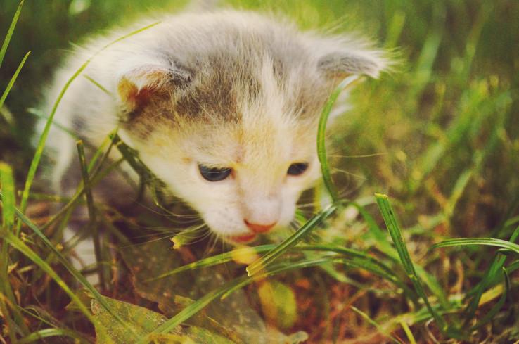 animal smell.jpg