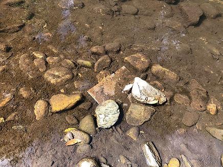 metal in river Banshtitsa for 3 days_edited.jpg