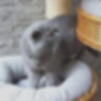 De vader van de kittens. Knappe Sothis.j