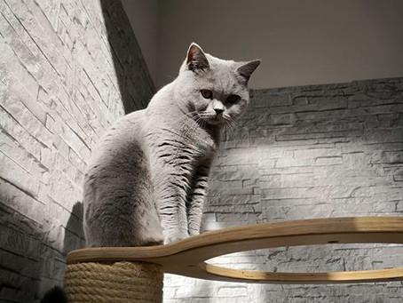 To kitten or not to kitten?