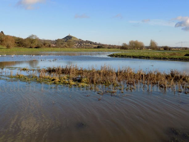 Glastonbury Tor from the River Brue