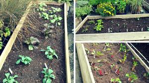New Garden Beds at Zio Casual Italian