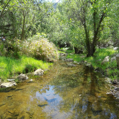 Bell Creek, full and green, hides minnows, tadpoles, and crawfish