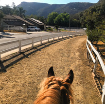 The view from up high on one of Bell Canyon's many horse-friendly trails