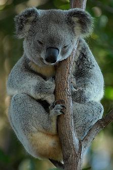 australia-699228_1920.jpg