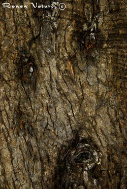 פרצוף בעץ