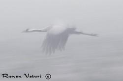 לעוף בערפל