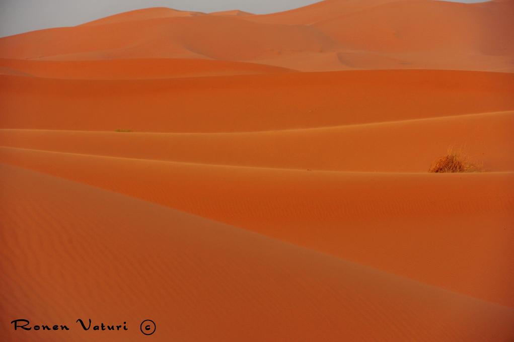 מרוקו - דיונות בסהרה