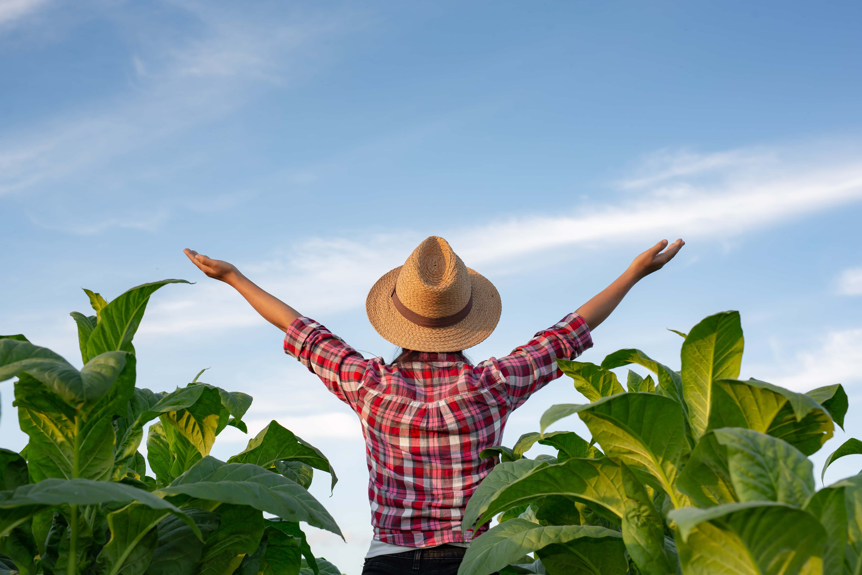 Mulher em uma plantação de tabaco