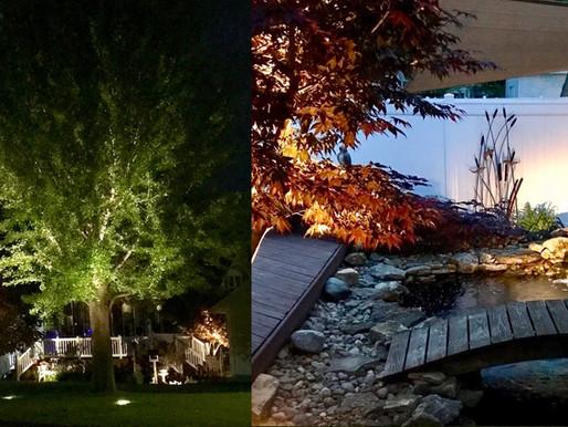 Tree & Koi Pond Lighting