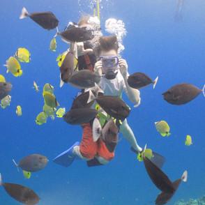 Swim Underwater with Fish