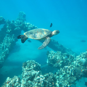 Snuba Diving with Turtles