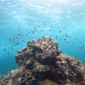 An Amazing Underwater View